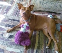 cinnamon w purple bear